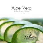 Amera Aloe Vera Cream ครีมว่านหางจระเข้ ดีจริงหรือ?