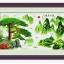ต้นไม้ครอสติสจีนพิมพ์ลาย thumbnail 1