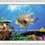 ปลา คลอสติสพิมพ์ลาย thumbnail 1