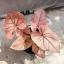 ต้นบอนสี มหาเฮง ขนาดกระถาง6นิ้ว thumbnail 2