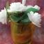 เทียนช่อดอกมะลิในแก้วเหลืองสวย 6 ดอก thumbnail 3