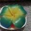 เทียนหอมดอกลีลาวดี เขียวเหลือง thumbnail 4