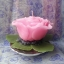 เทียนหอมดอกกุหลาบสีชมพูพร้อมใบ thumbnail 1